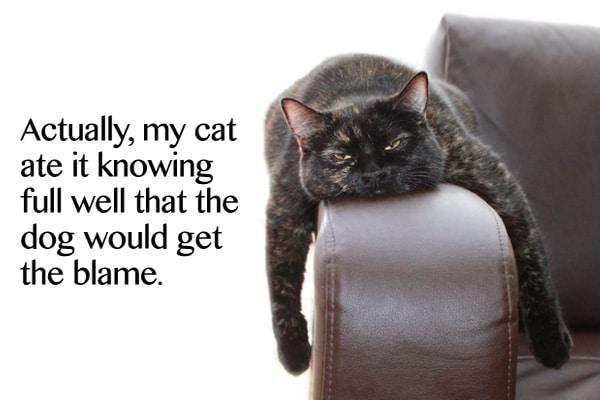 homework-excuses-cat-blame